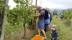 ekdalen-deltar-i-vinskorden